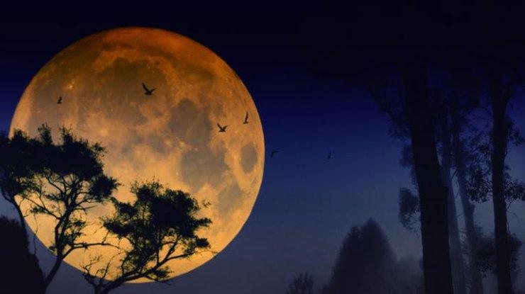 Томичи смогут увидеть самый яркий вгоду звездопад вночь навторник