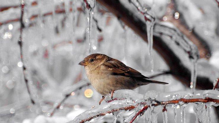 ВКиеве завтра обещают небольшой снег игололедицу надорогах
