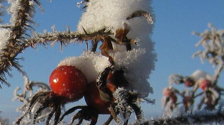 Сегодня вгосударстве Украина снег имороз