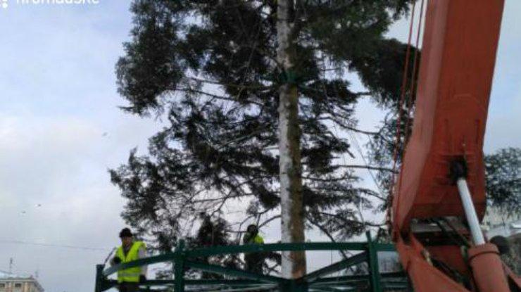ВКиеве установили главную елку страны