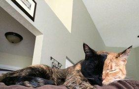 Невероятная кошка Венера покорила интернет своей окраской