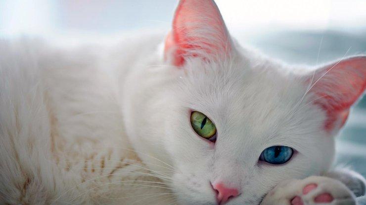 Самый красивый кот, которому пророчат блестящее будущее