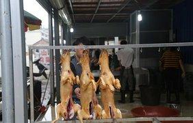 Фестиваль поедания собак и кошек в Китае
