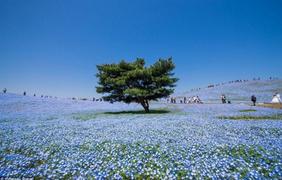Фото: Hidenobu Suzuki/500px