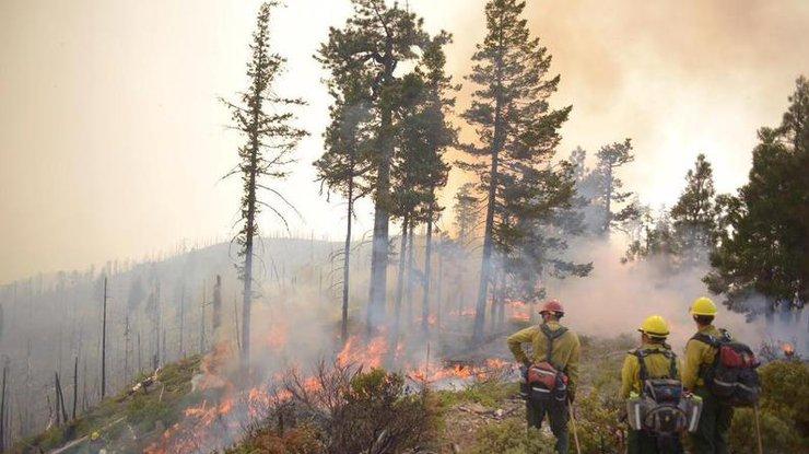 Поселок нефтяников сгорел дотла отлесных пожаров вКанаде
