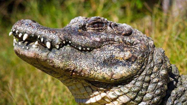 Катастрофа вДиснейленде: что аллигатор сделал с сыном