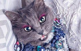 Невероятно красивая кошка-модница