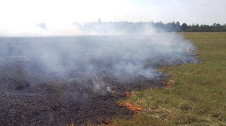 Выжженные пшеничные поля и поврежденные дома: последствия обстрелов боевиками Марьинки - Цензор.НЕТ 586
