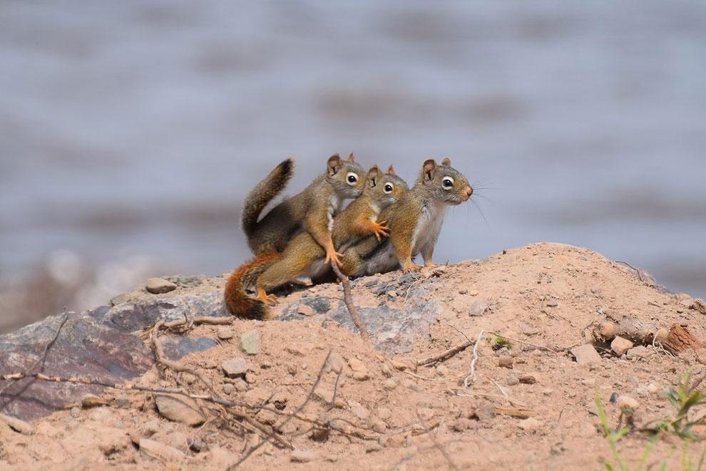 Жемчугом, прикольные картинки о животных и природе