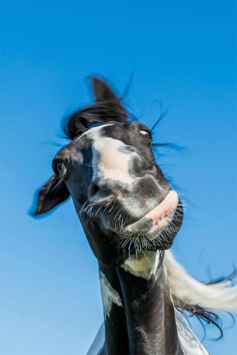 Картинка веселого коня
