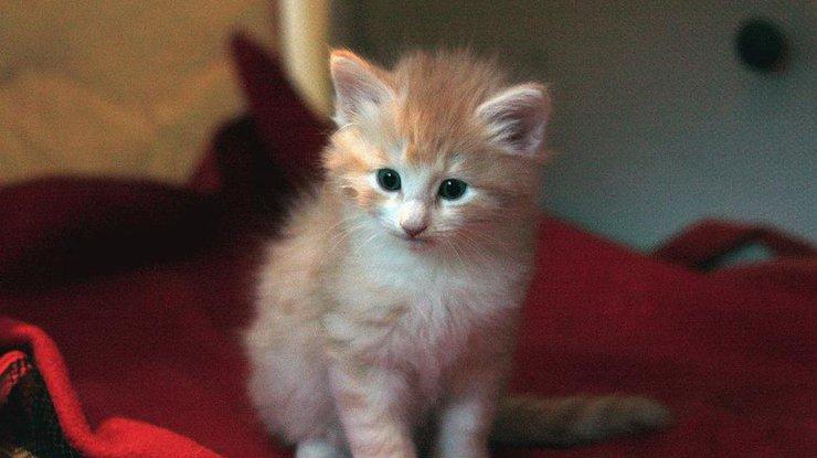ВЯпонии установлен рекорд по длительности жизни кошек исобак