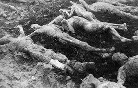 Останки человеческих тел, найденные после раскопок в Киеве