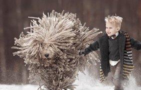 Лохматая собака показала, как нужно прыгать по сугробам (фото: Andy Seliverstoff)