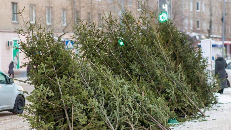 Новогодние елки начали принимать наутилизацию вКиеве