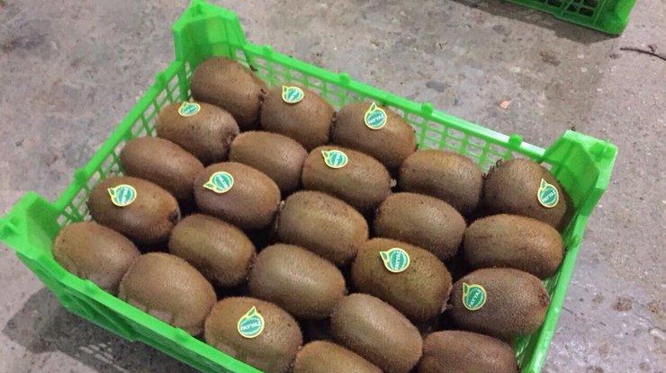 ВОдессе задержали 20 тонн зараженного киви