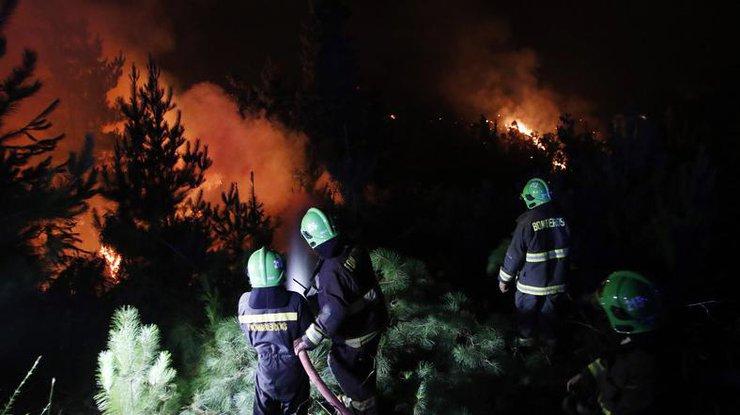 Власти Чили объявили режим катастрофы из-за пожаров