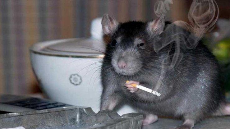 Ученые выявили позитивную роль никотина вборьбе сшизофренией