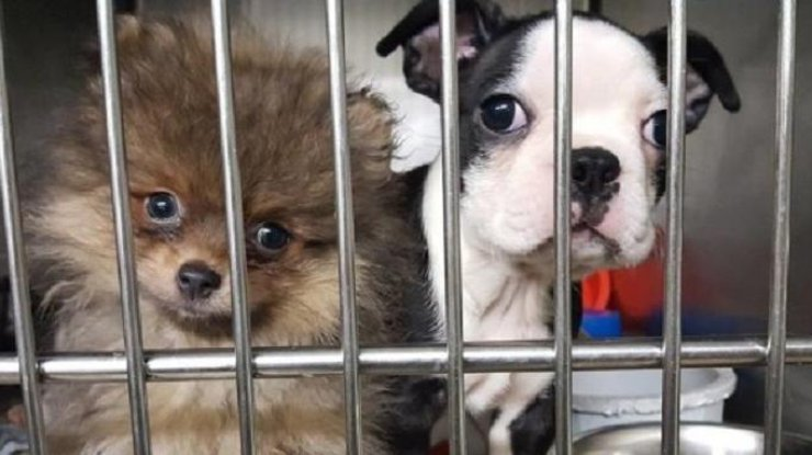 Вштате Нью-Йорк перевернулся фургон со103 щенками