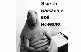 """""""Ждуна"""" с глазами, похожими на морского котика можно встретить в Украине. Фото: соцсети"""