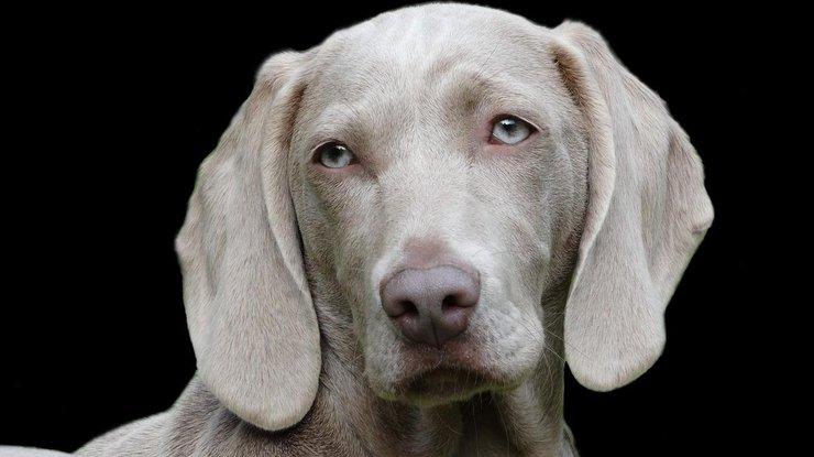 Ученые: Собаки могут общаться слюдьми при помощи мимики иэмоций