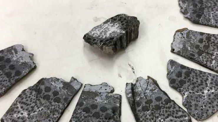 Палеонтологи отыскали останки потенциально древнего дерева наЗемле