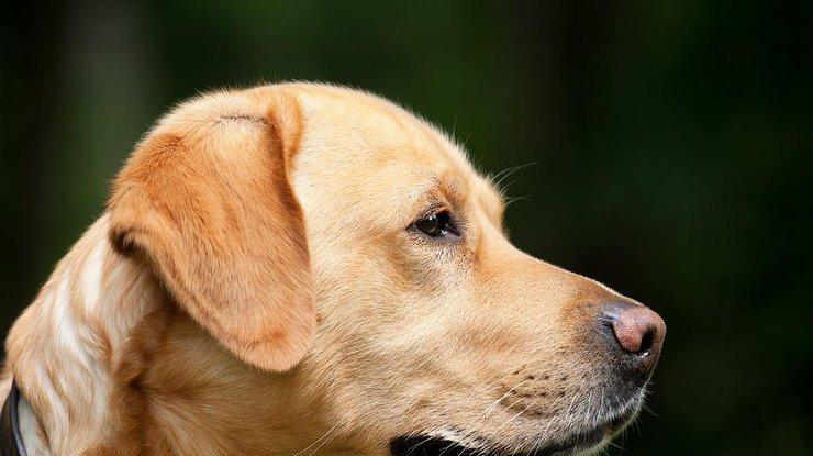 Встолице запретили выгул животных натерритории медицинских учреждений