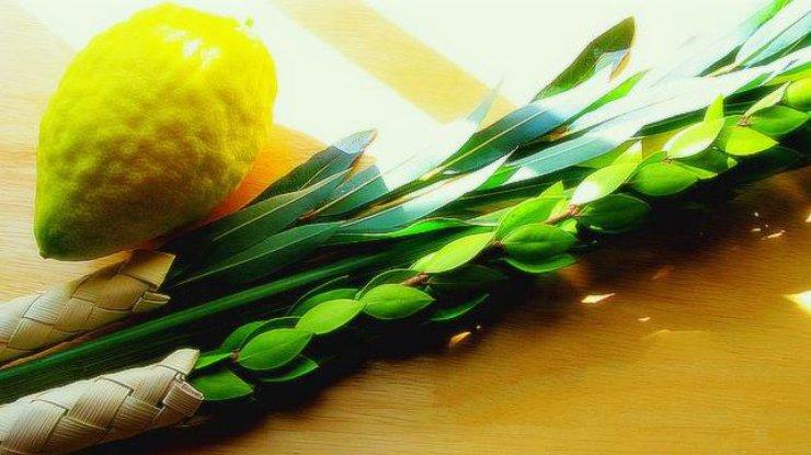 Суккот: история итрадиции праздника кущей