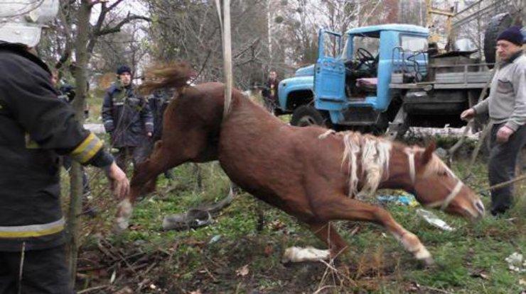 ВЖитомире спасли лошадь, которая провалилась вканализацию