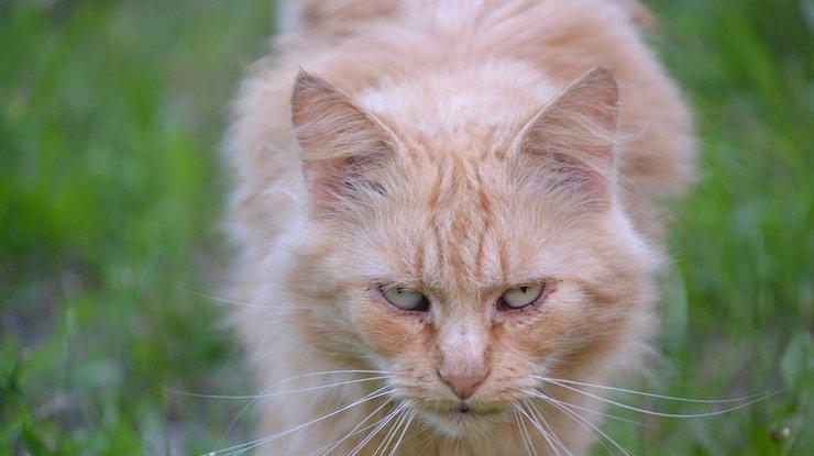 Японские полицейские подозревают кота впокушении наубийство пенсионерки