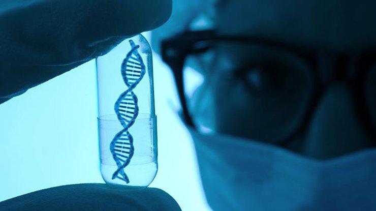 Открыт ген долголетия