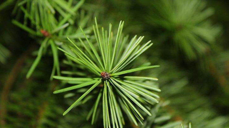 Елочка, гори: вцентре Астаны полыхала новогодняя елка