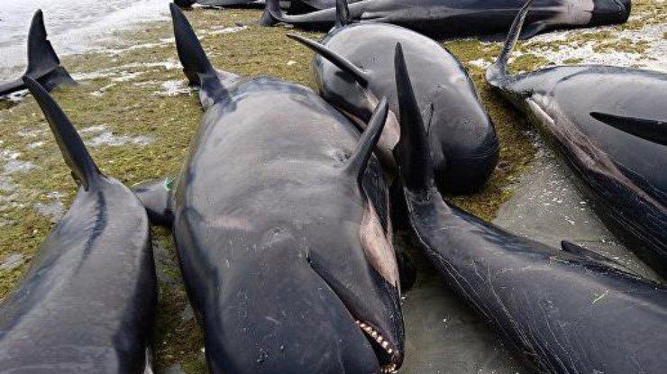 киты и акулы фото