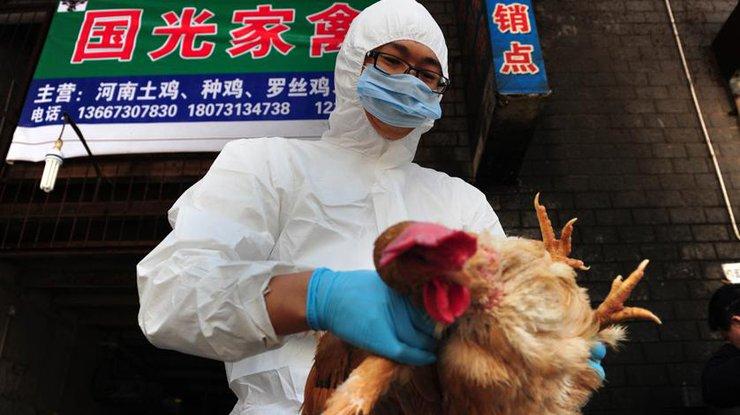 В «Поднебесной» зафиксировали крупнейшую вспышку птичьего гриппа с2013 года