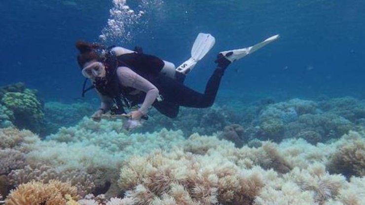 Ученые говорили о неизлечимой болезни огромного Барьерного рифа