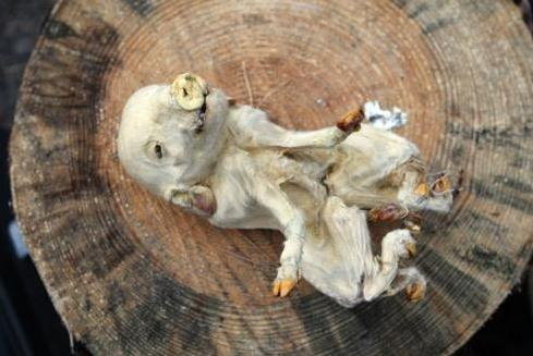 Фото детей погибших на титанике