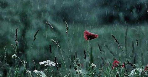 фото дождь донецк