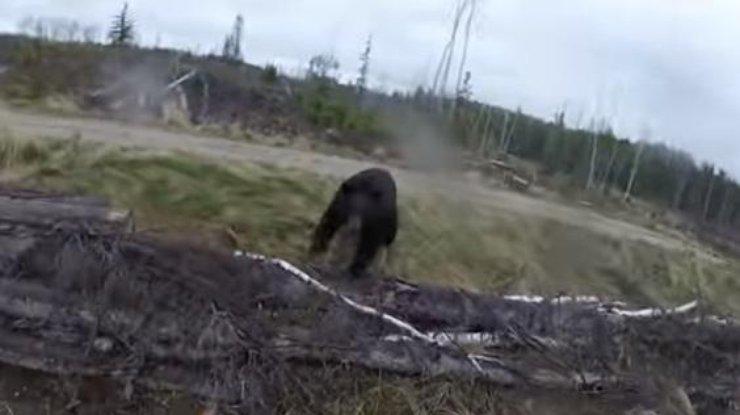 Канадец пытался отбиться отмедведя луком истрелами