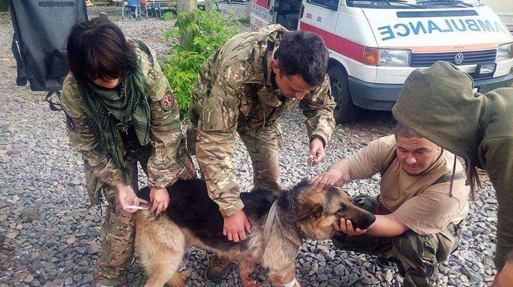 НаДонбассе собачка получила тяжелые ранения, прикрыв собой 2-х украинских бойцов