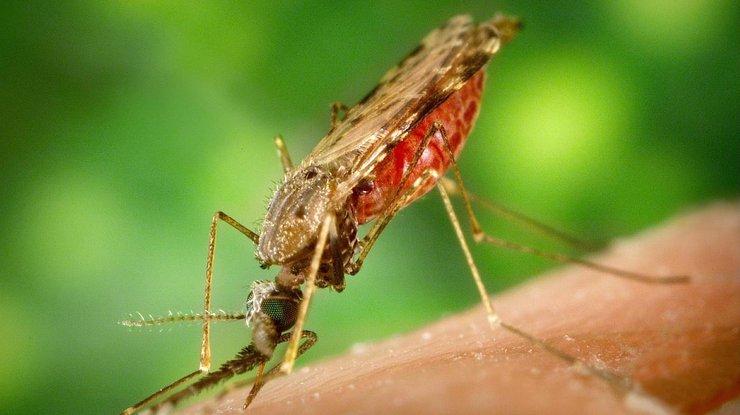 ВИндии три человека заразились вирусом Зика