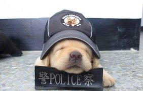 В Тайване появился самый милый полицейский в мире