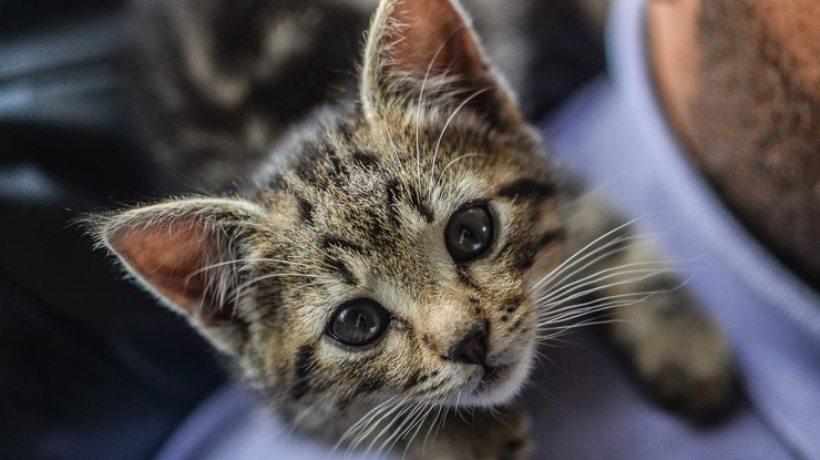 ВЛуцке мужчине вынесли приговор заиздевательство над котятами