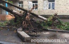 Последствия мощного урагана. Фото: Анна Демиденко