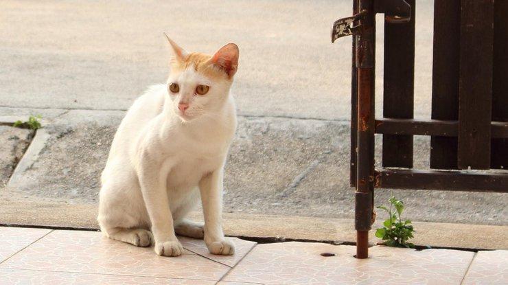 ВКалифорнии мужчину приговорили к16 годам тюрьмы заубийство 21 кошки