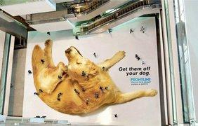 Фото: Пол в торговом центре Джакарты - реклама спрея от блох для собак