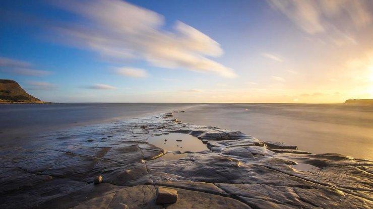 На берег вКалифорнии выбросило неизвестное морское существо