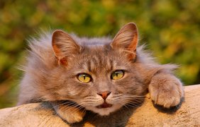 Всемирный День Кошек / Фото: pixabay