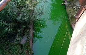 В Киеве речка Лыбидь стала ярко-зеленой