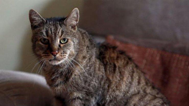 Самый старый кот вмире скончался в Англии