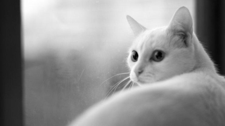 Преданность кота