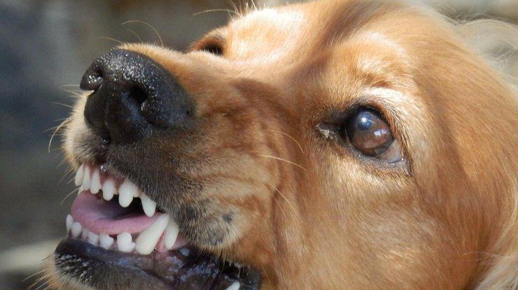 Туристку из Великобритании растерзали дикие собаки вГреции